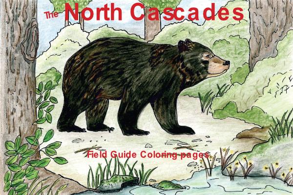 North Cascades Bear Dragonfly Hollow Studio