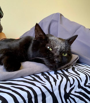 Whidbey Canine Conditioning & Rehabilitation Lucy Lou Cat