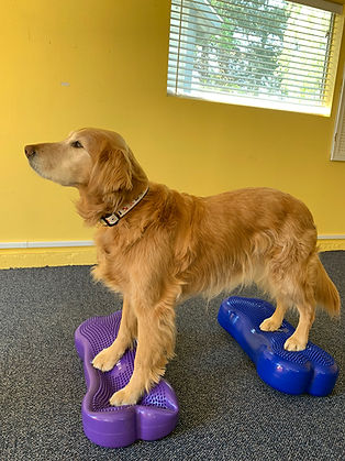 Whidbey Canine Conditioning & Rehabilitation Dog Exercise