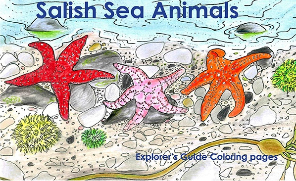 Salish Sea Animals Sea Stars Dragonfly Hollow Studio