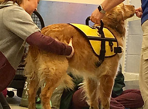 Whidbey Canine Initial Consultation