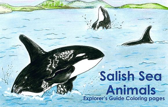 Salish Sea Animals Orcas Dragonfly Hollow Studio