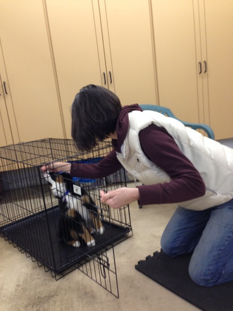 Whidbey Canine Conditioning & Rehab