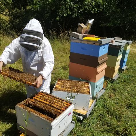 Eckholm Farm Whidbey Island WA Local Honey