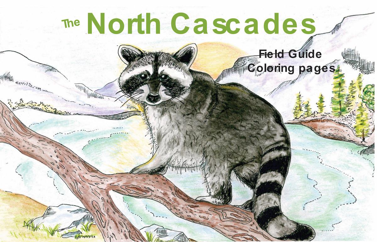North Cascade Animal Covers Raccoon resi