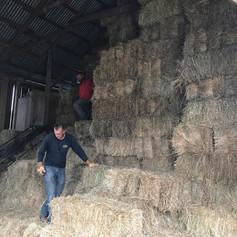 Eckholm Farm Whidbey Island WA Grass Hay
