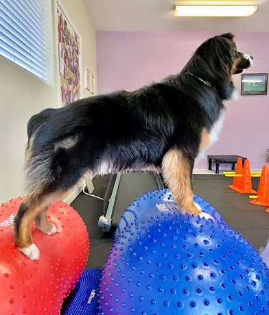 Whidbey Canine Conditioning & Rehabilitation Dog Exercise 2