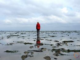 wadden-sea-alone-mudflat.jpg