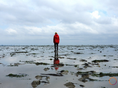 wadden  sea -alone in the mudflat