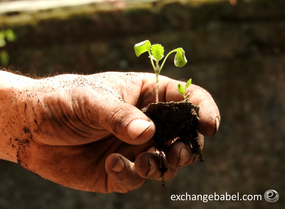 plant_nature_java_indonesia