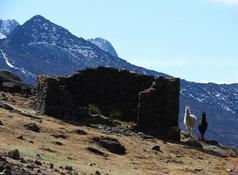 alpaca and inca