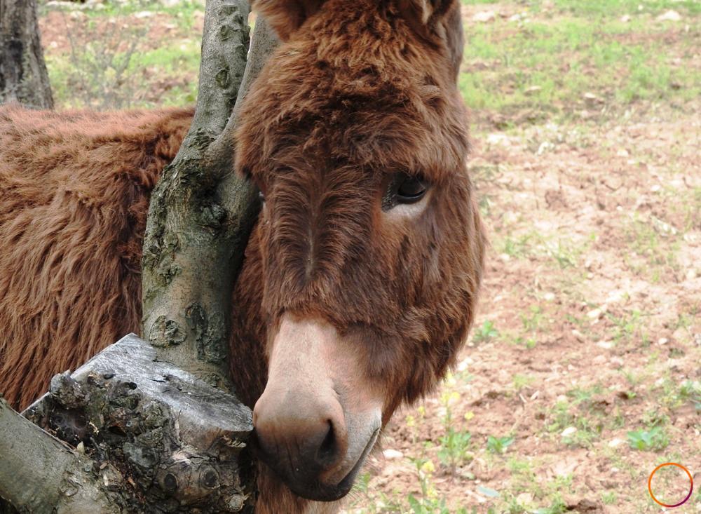 Urla_shy donkey