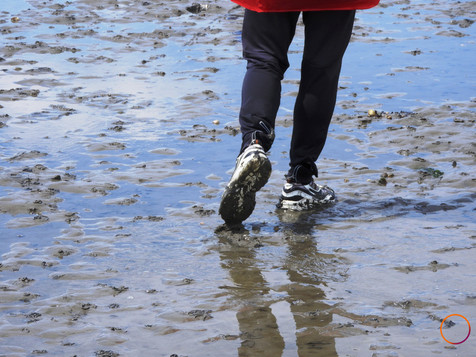 wadden sea - walking mudflat