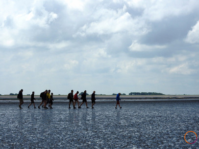 wadden sea - group mudflat