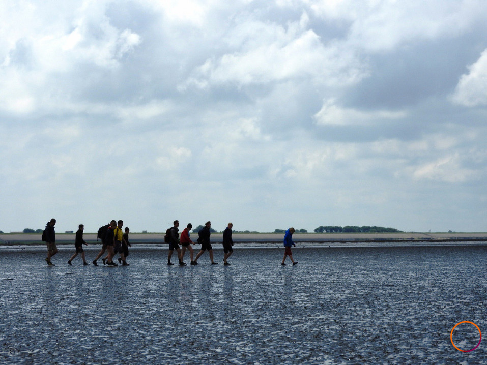 wadden sea - group mudflat