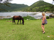 horse in the island