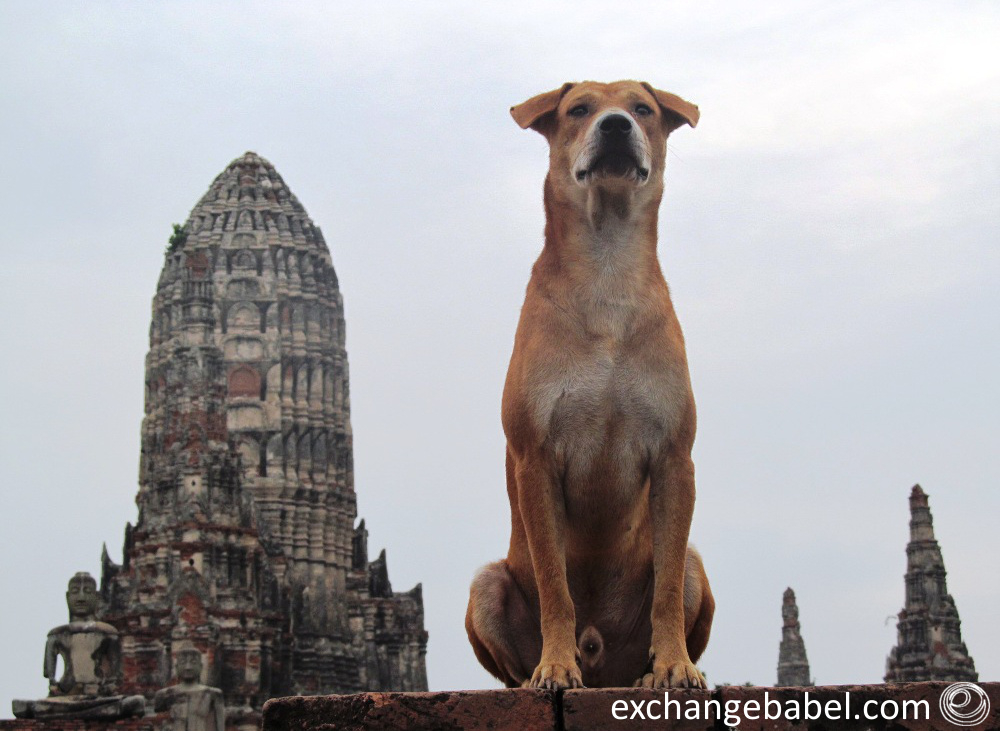 Ayuttaya_Thailand_temple_dog