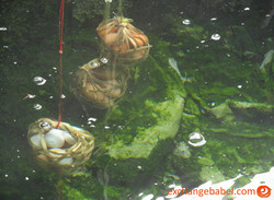 Phrao_Thailand_eggs_in_thermal_water