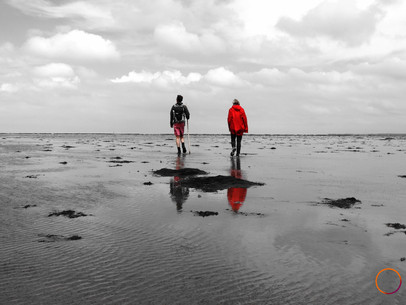 wadden sea - our guide