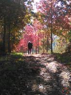 on the autumn way