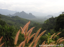 KhaoSok_Thailand_view_jungle