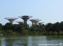 singapore_tree_docks_marina