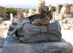 Ephesus_cat dominum