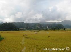 vietnam_thanh hoa_rice_paddy_countryside