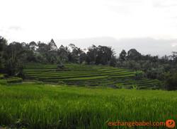 rice_terrace