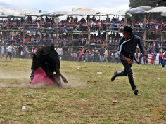 corrida ecuadorena
