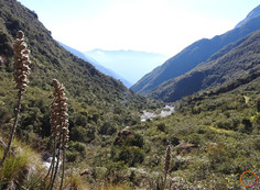 between san francisco and chukura - cloud forest