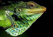 chameleon-664515_960_720.jpg