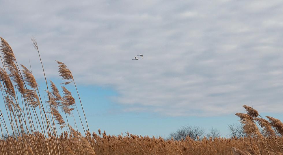 Banner Marsh, Canton, Illinois, 2018