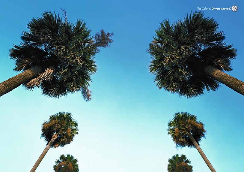 2.PalmTreeLOWs.jpg