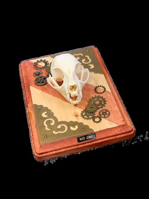 Domestic Cat Skull On Plaque