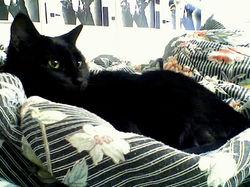 reine on comforter; salma poster 1