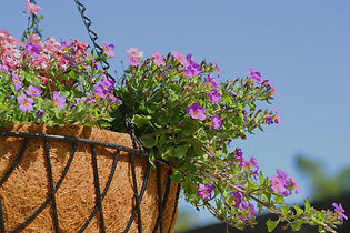 Purple%20and%20Pink%20Hanging%20Flowers%