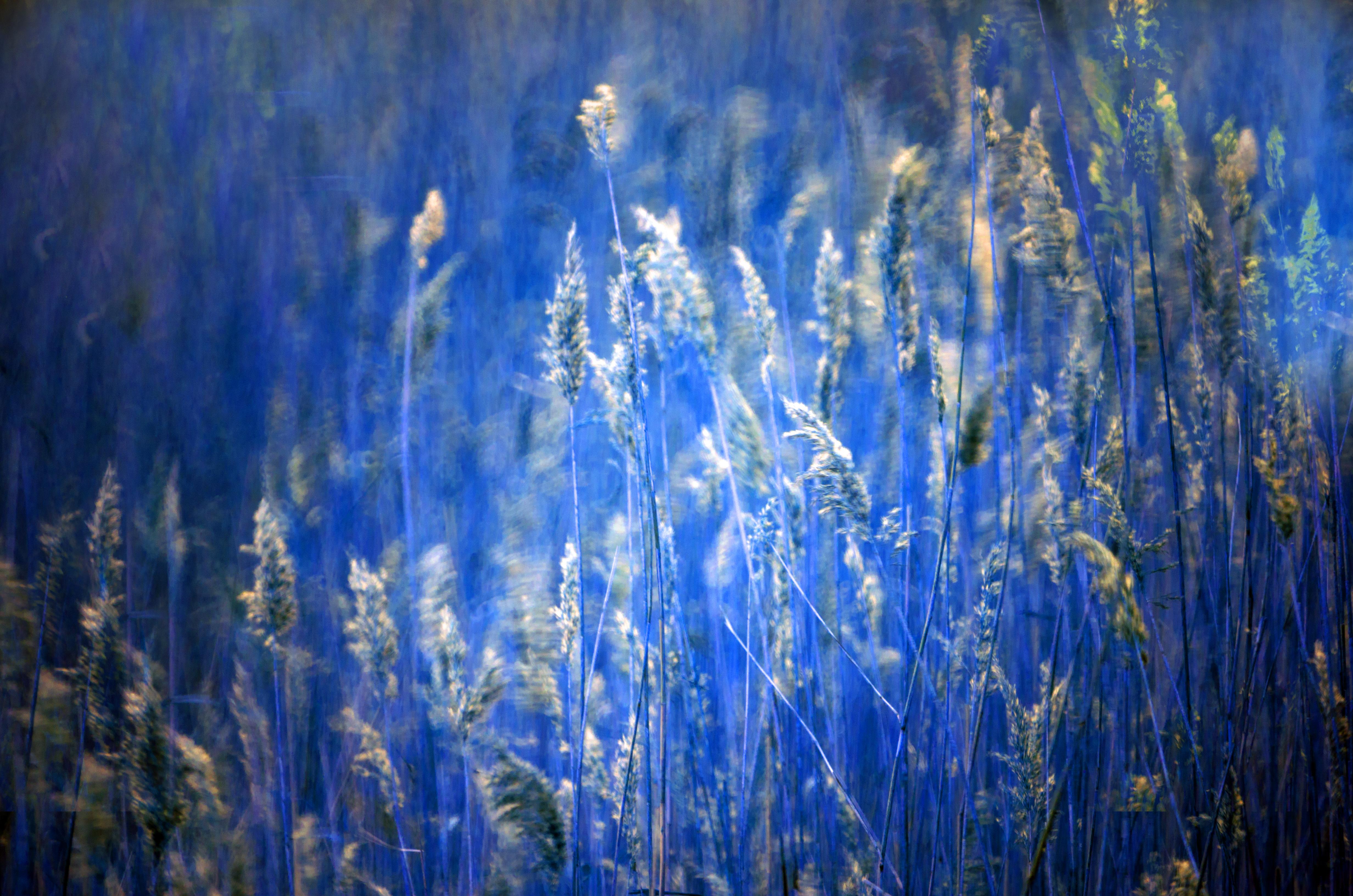 Bleu hour fotografie van Willem Jacobs