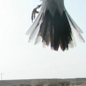 טשלס בריחוף 16-01-2007 12-20-31.jpg