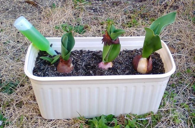 園芸療法2018年度⑯
