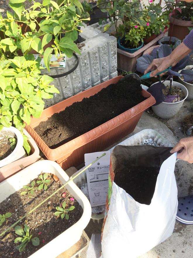 冬の園芸療法 2018年度 元気に育つように④