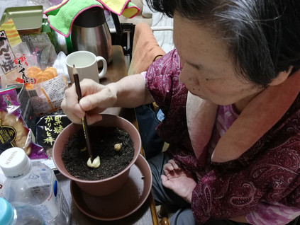 冬の園芸療法2021年度チオノドクサ編 ④