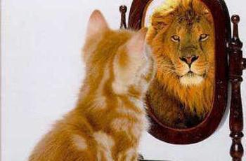3216874516_Kitten_Mirror_Lion_xlarge.png