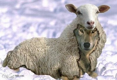 false-prophet-wolfe-in-sheep-clothing.jpg