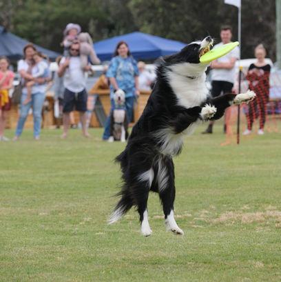 Dog Event Norah Head NSW Event Photographer Central Coast NSW