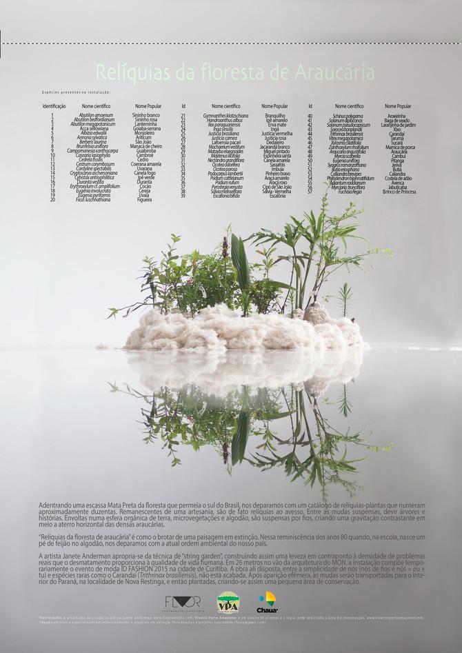 Relíquias da floresta com Araucária