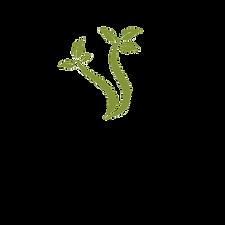 Launch Logo.png