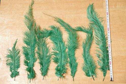 羽根 緑オーストリッチ(25〜45cm)10本セット