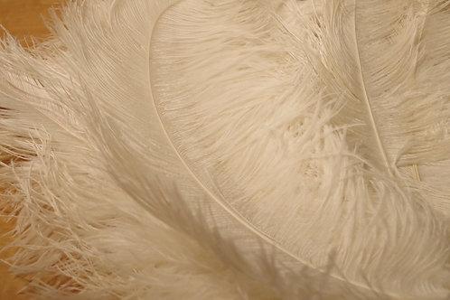 羽根 白オーストリッチ(60~70cm)