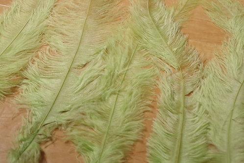 羽根 薄緑(45cm)